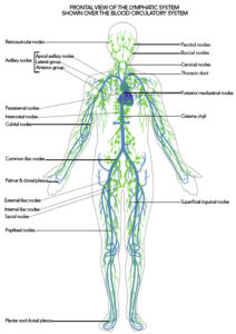lymph system healing crisis