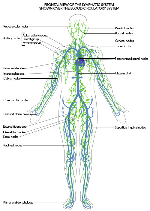 healing crisis & the lymph system - a warrior curing psoriasis, Human Body